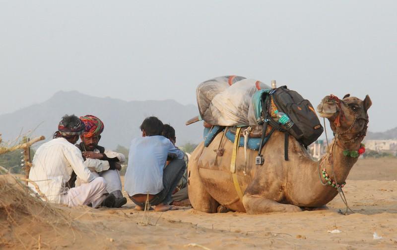 Camel safaris- places to visit in Pushkar India