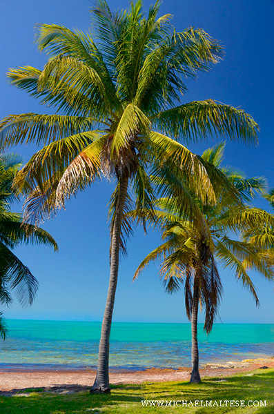 _DSC0331-3-Palm-Trees-and-T.jpg