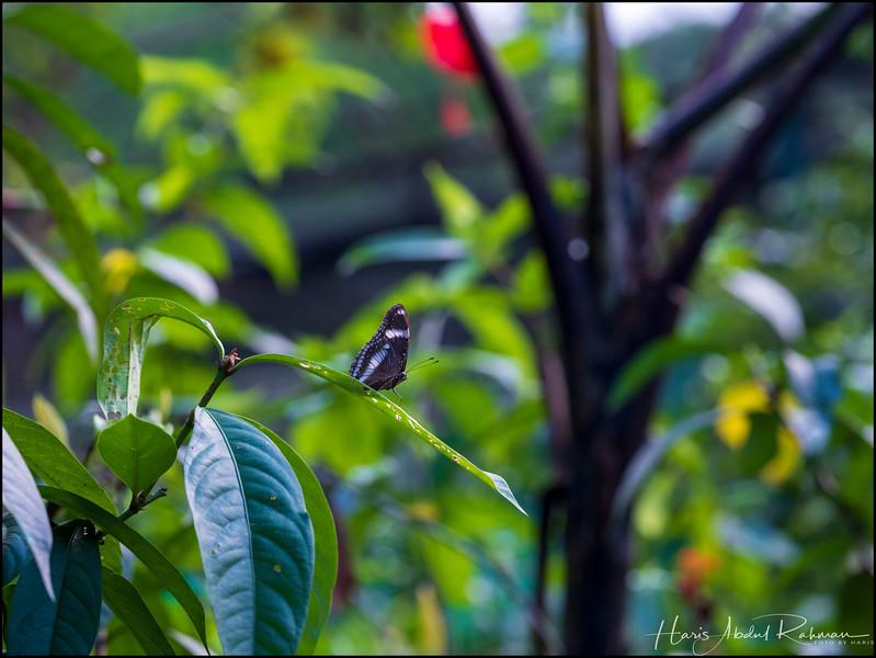 200104 KL Butterfly Park 21.jpg