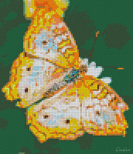 C Square Butterfly 6 x 7_mosaic.jpg