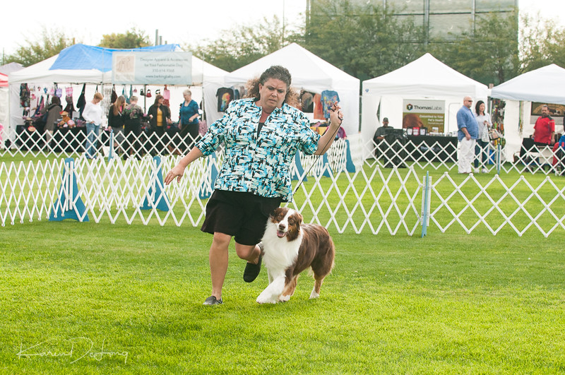 20170114_Kachina Kennel Club_Aussies-52.jpg