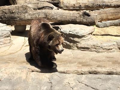 Quinn Zoo Field trip