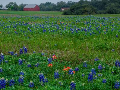 Wildflowers 2020