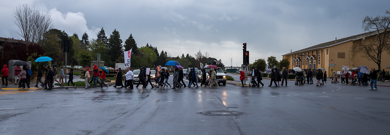 Tam and Redwood Walkout (88 of 91).jpg