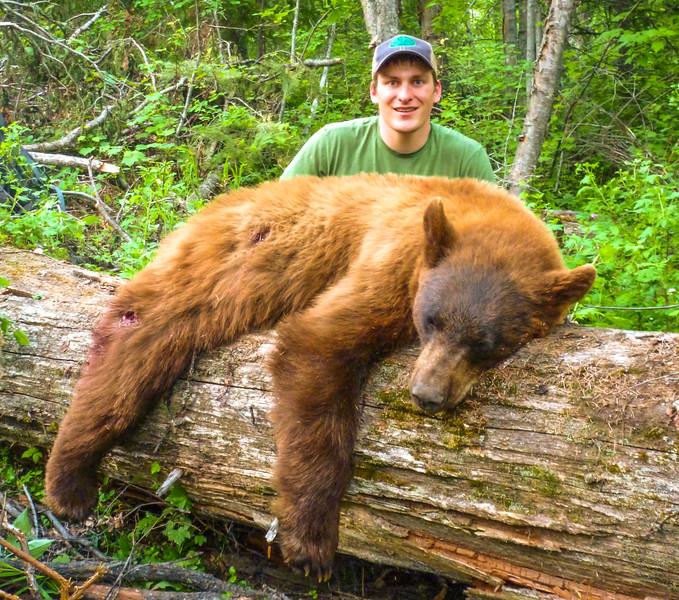 Washington spring color phase black bear