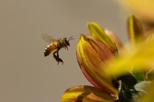 Bees June 2016