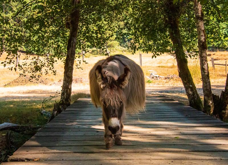 Leaping Lamb Farm-7878.jpg