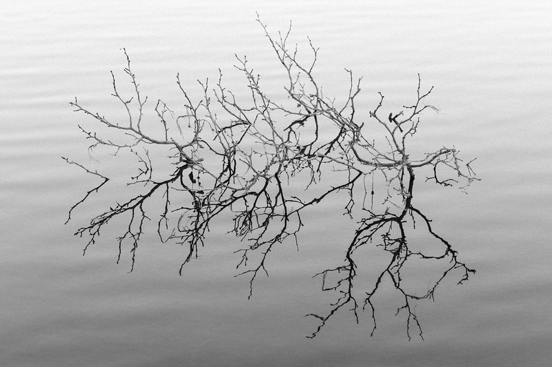 DEAD_BRANCH_IN_LAKE_LYON.jpg