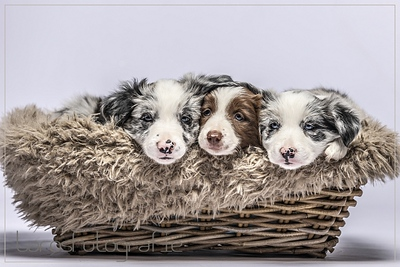 Puppy's-4