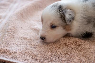 2019-09-01 Foxpointe Puppy 4