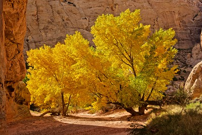 Capitol Reef Day Hikes