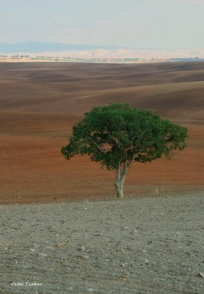 העץ2.jpg