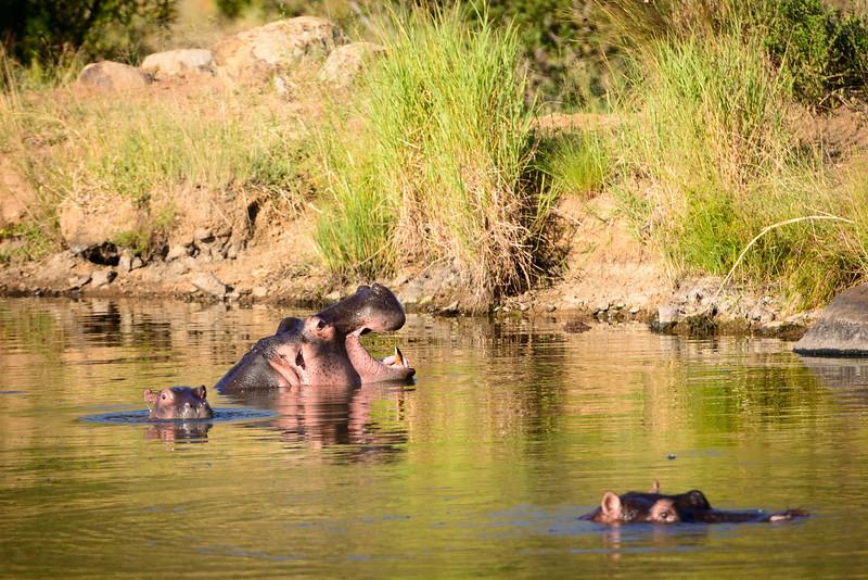 Pilanesberg-20130217-0645