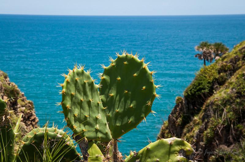 Mexico-Veracruz-atmex-9669.jpg