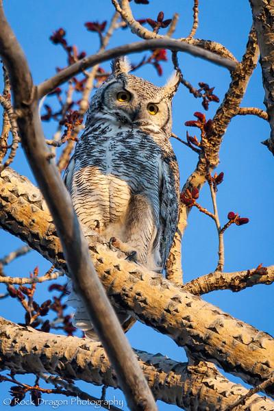 Owl-12.jpg