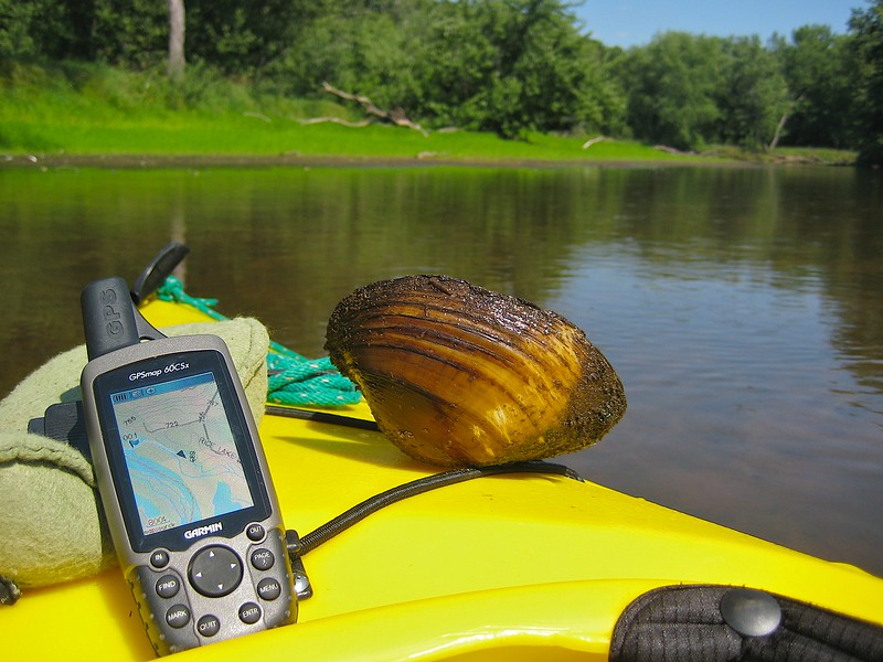 Navigating a back channel St. Criox River. The water here is just inches deep. I plucked this from the clear water.