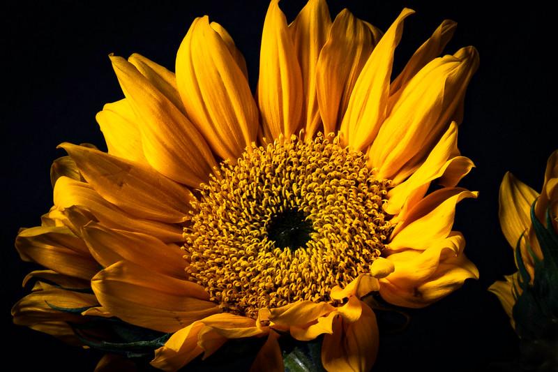 Botanicals-023.jpg