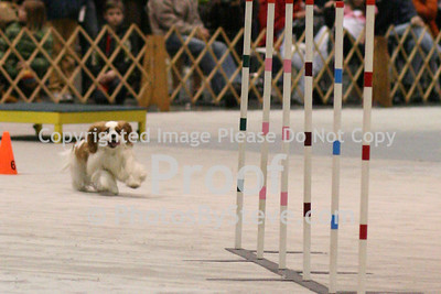 Seattle KC - Agility - March10-11, 2012