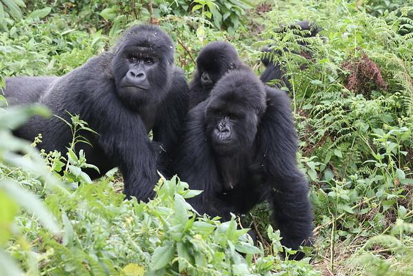 Rwanda and Kenya 2016