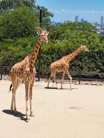 20140131 Taronga Zoo