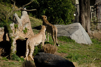 National Zoo 2012
