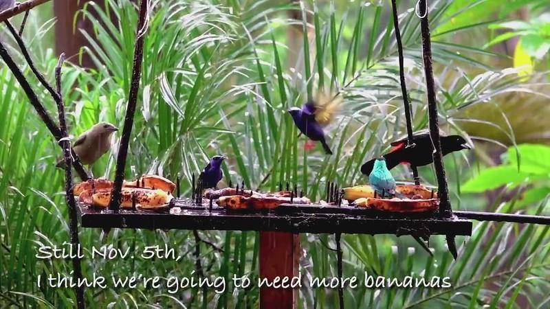 Vid by Bryan Quebradas, Costa Rica November 2020