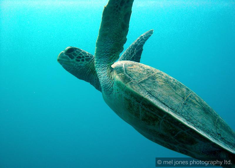 Barrier Reef 065.jpg
