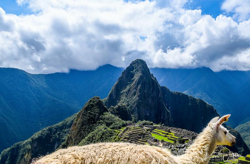 2018 Machu Picchu-47.jpg