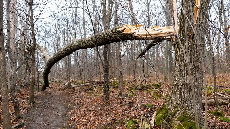 Ontario-Lincoln-BruceTrail-Hike12-10.jpg