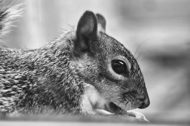 squirrel001BW.jpg