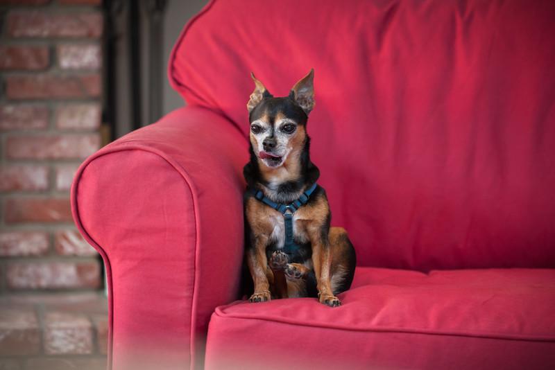 2015: Dogsitting Romeo