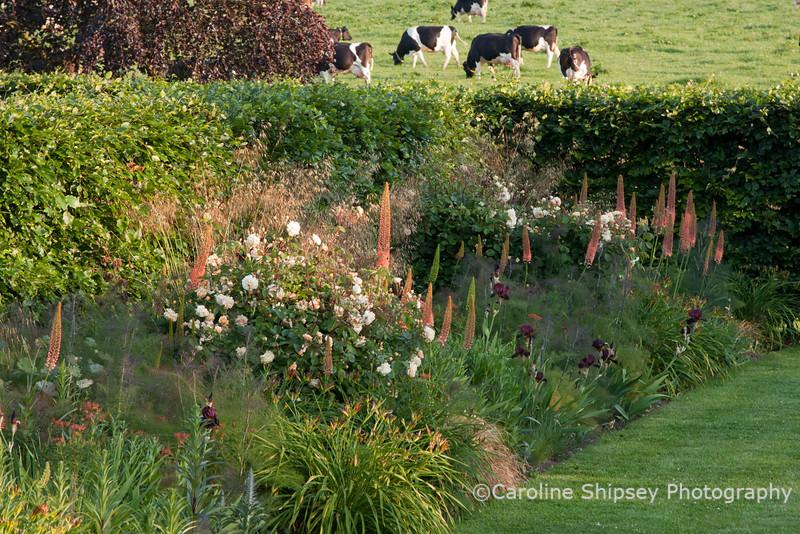 The Organic Gardens, Holt Farm-2253.jpg