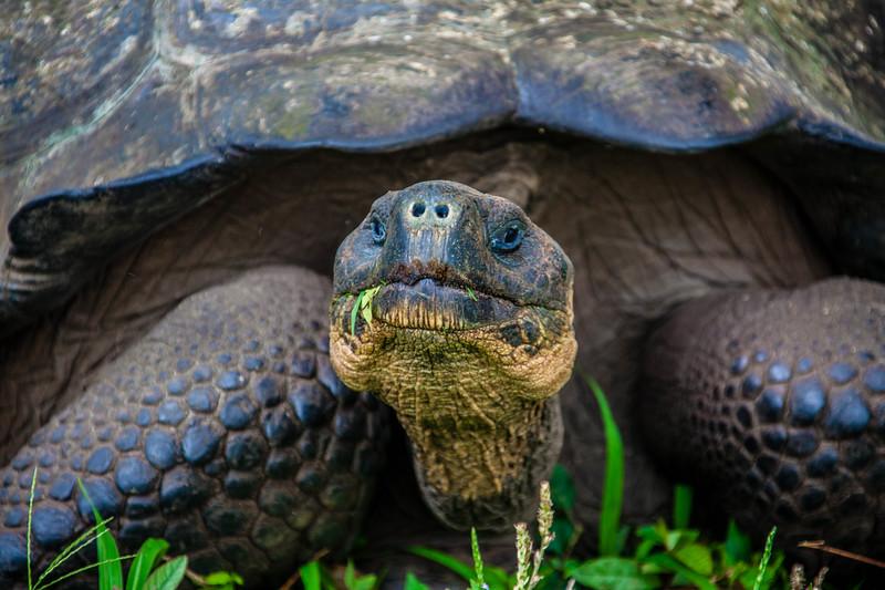 Giant Tortoises-5.jpg