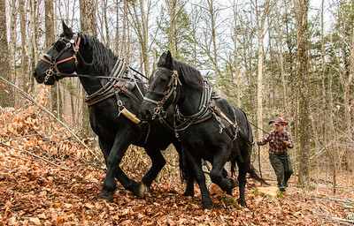 Bob Capobianco Horse Logging Week