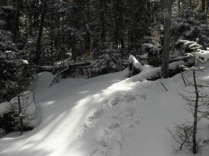 Nice woods heading to West Pilot.JPG