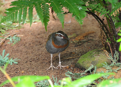 Georgia Kangaroo Reserve