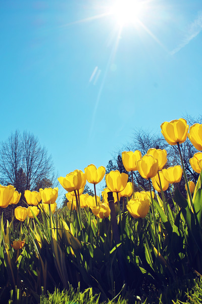 Spring at Manito Park...
