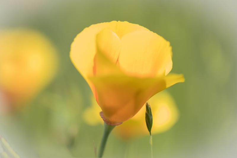 Poppy's 4-8-16-4887.jpg