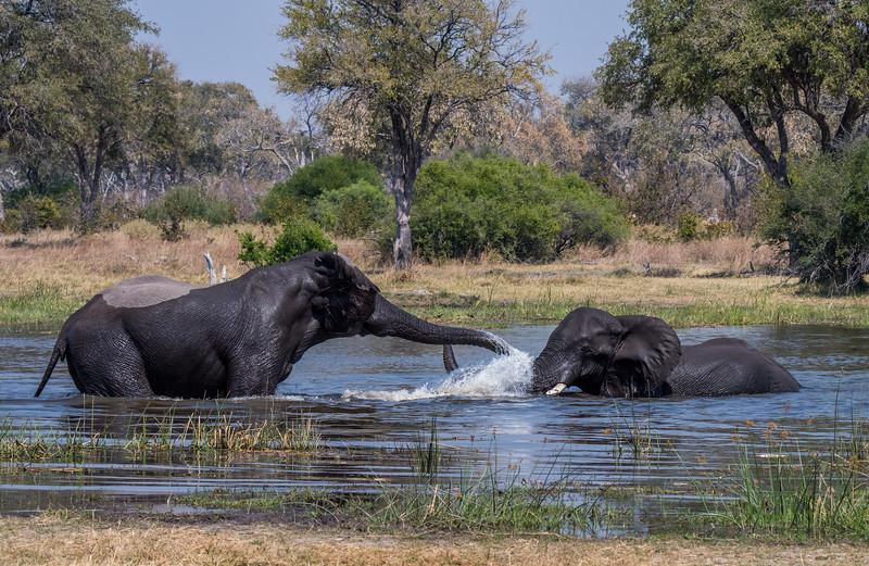 Botswana_June_2017 (2733 of 6179).jpg