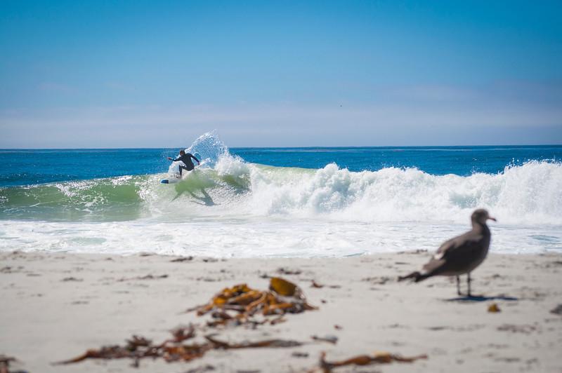 Surfer-DSC_0346.jpg