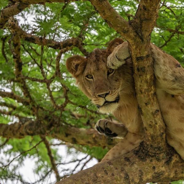 Uganda_T_QE-1086.jpg