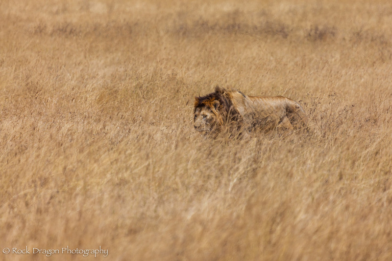 Ngorongoro-69.jpg
