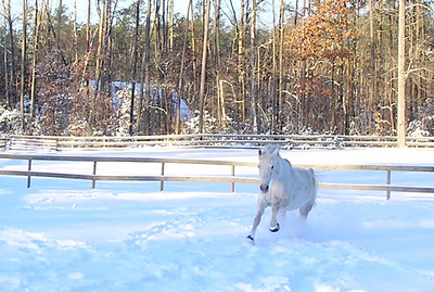 Jan10 Snow