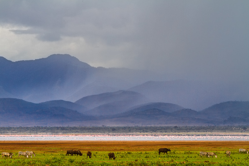 Rain clouds pass over distant hills behind zebras, flamingos and buffaloes in Tanzania, Africa