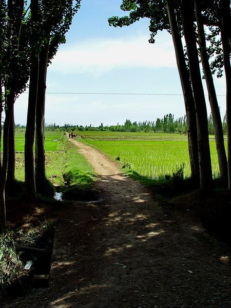 Path from village to rice paddies near Kashgar DSC02000.jpg