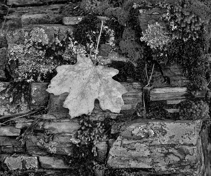 E Schloss_CCT_N-Leaf B&W After.jpg