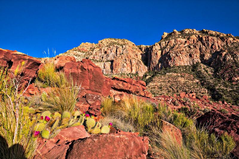 6238 Beavertail Cactus