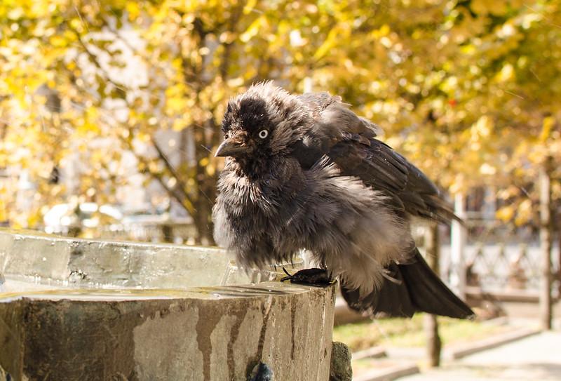 A bird in Minsk, Belarus