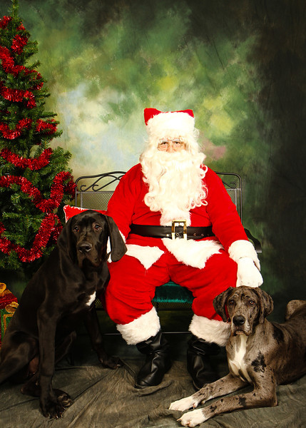 2013 Camp Bow Wow Eatontown - Pictures with Santa