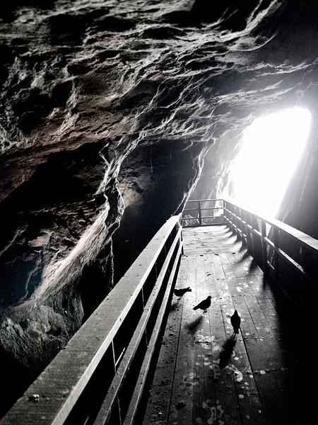 tunnel cave pigeons lr.jpg